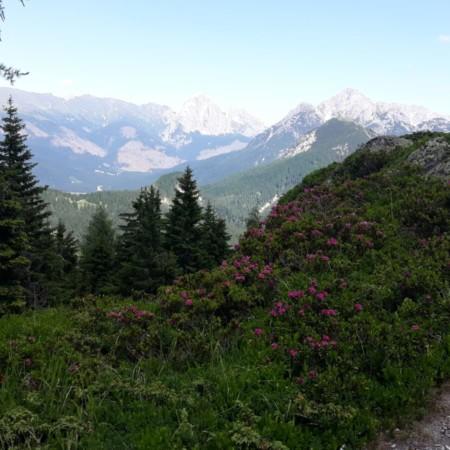 visuale sul percorso per Monte Zovo